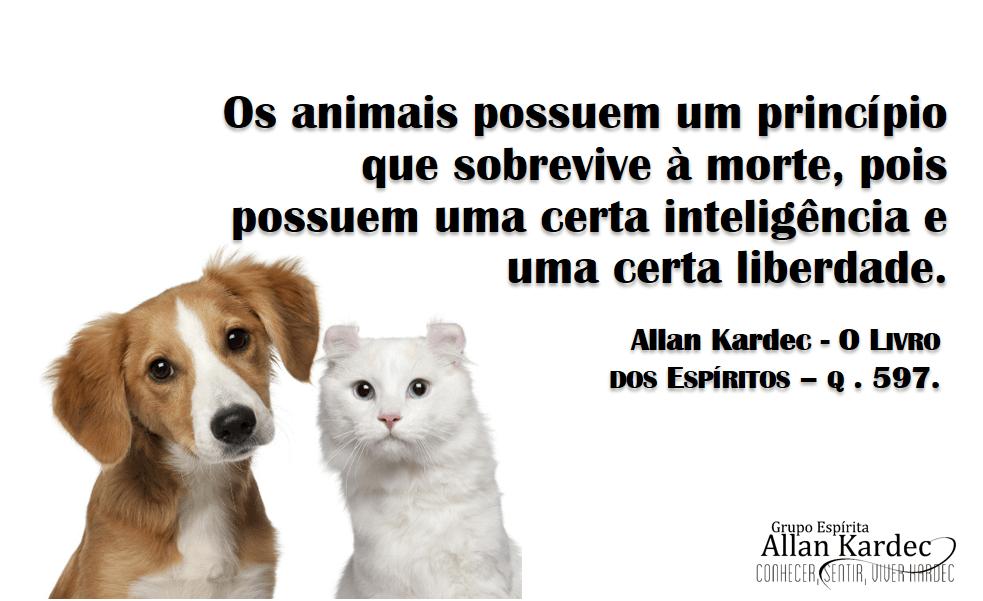 animais-principio