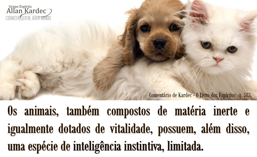 inteligência_instintiva